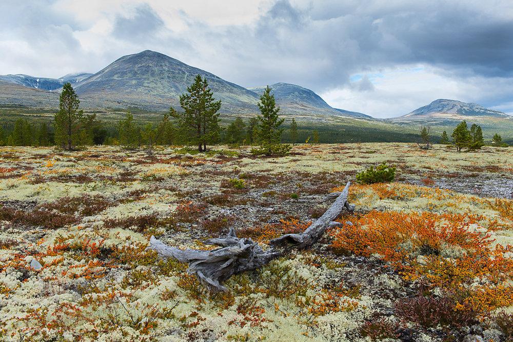 Herbst im Rondane Nationalpark