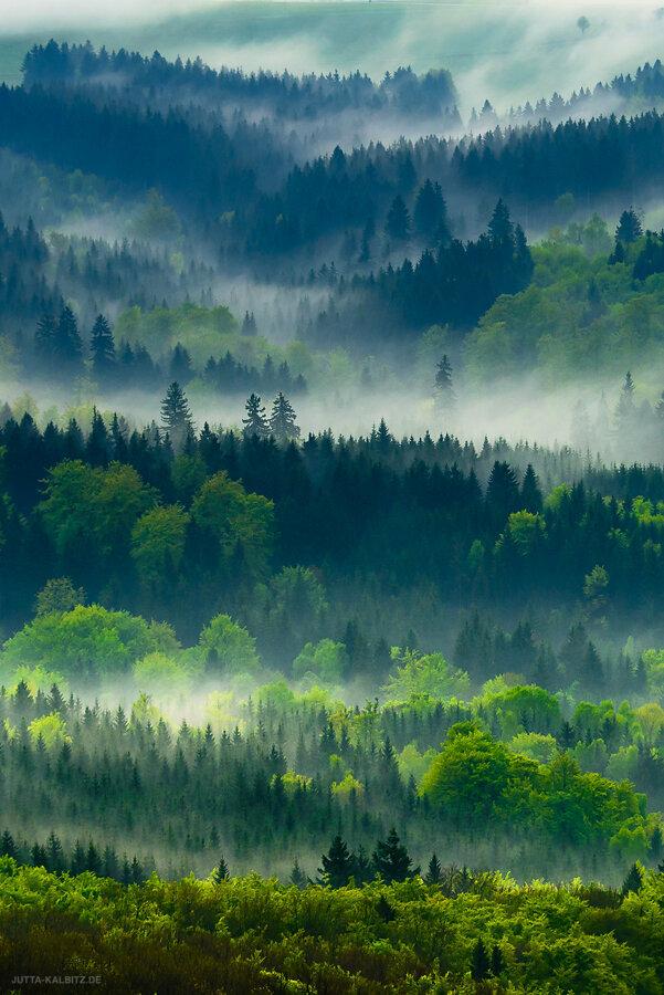 Bäume/ Wälder