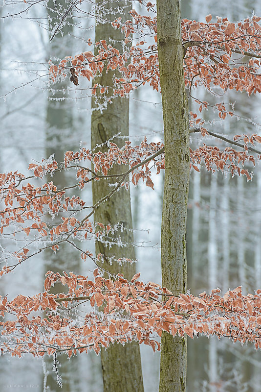 winterbaum-4.JPG