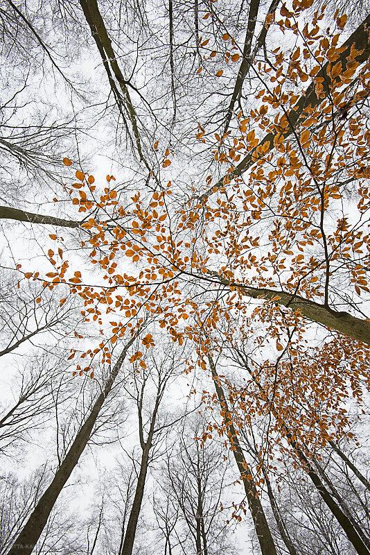 winterbaum-5.JPG
