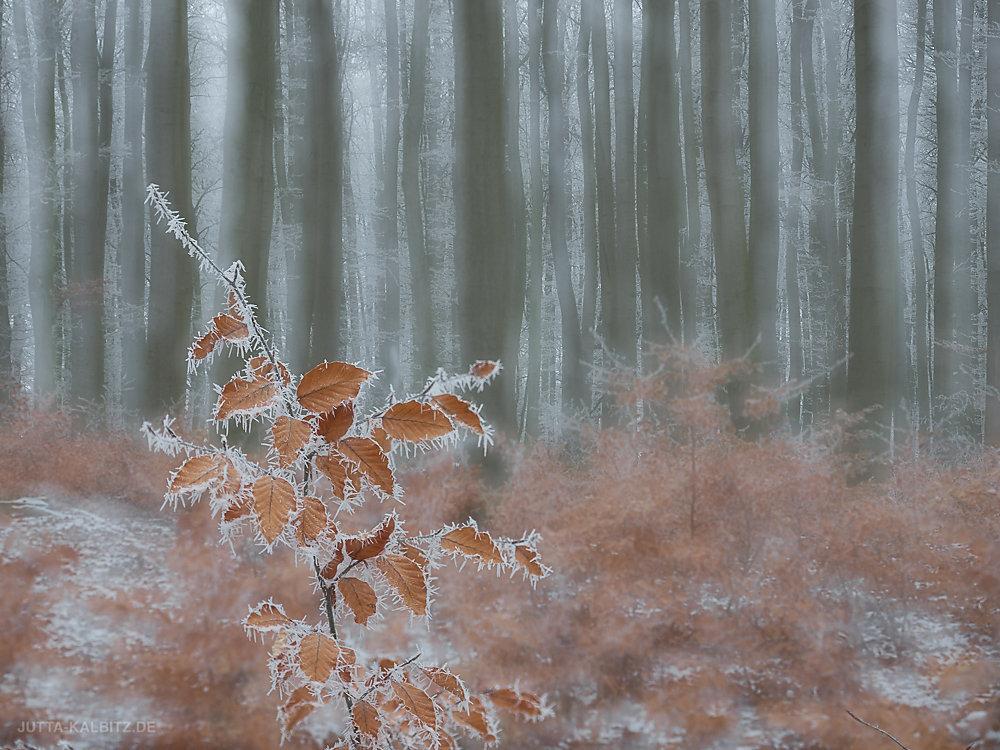 winterbaum-11.JPG