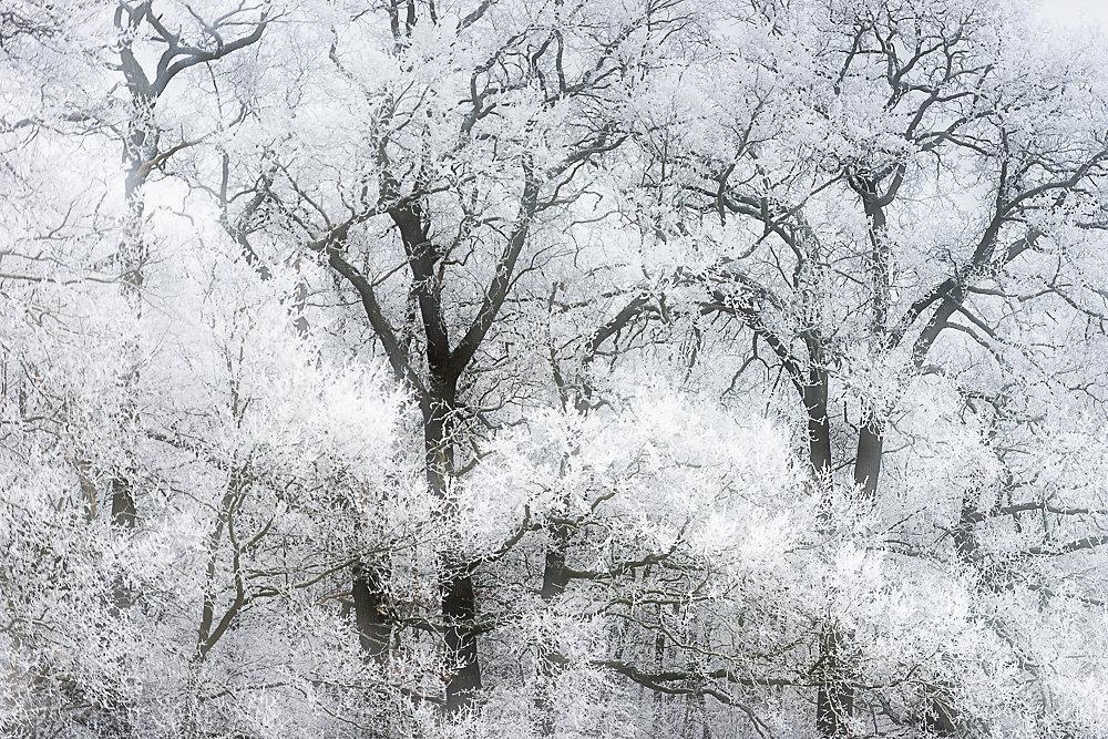 winterbaum-19.JPG