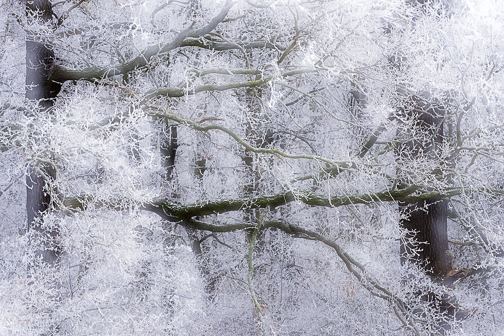 winterbaum-20.JPG