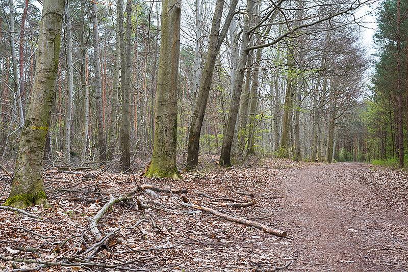 Doelauer-Heide-20.JPG
