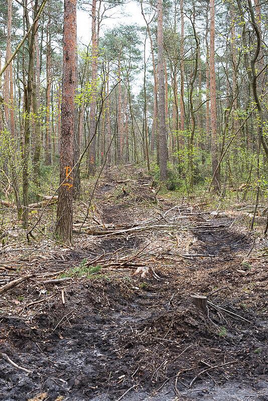 Doelauer-Heide-28.JPG