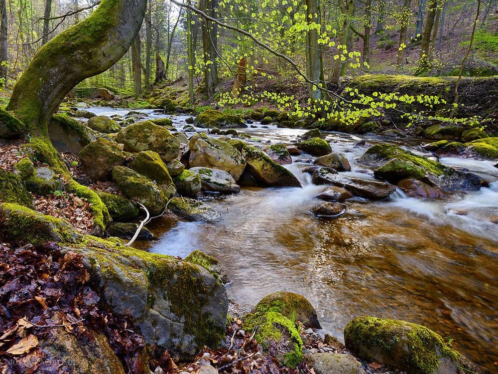 Frühling im Bodetal - Harz
