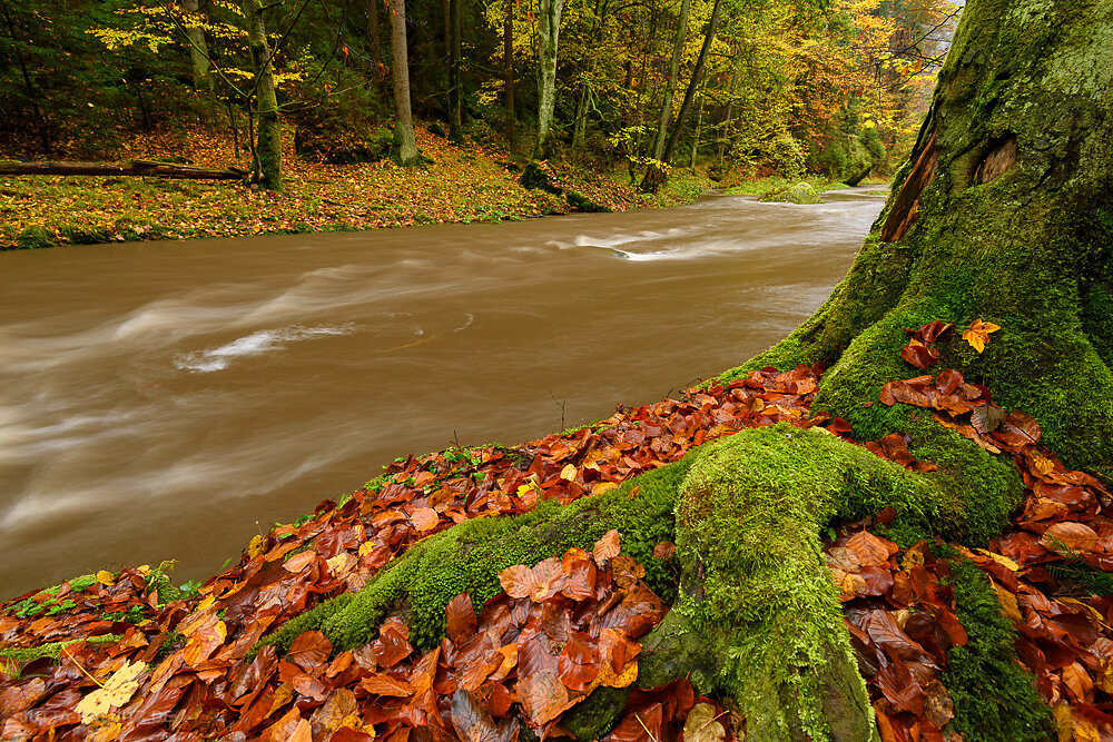 Im Polenztal - Sächsische Schweiz