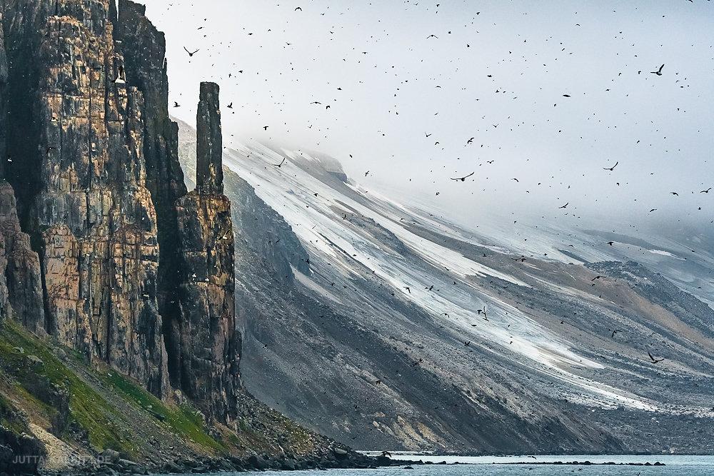 Svalbard-fauna-2.jpg