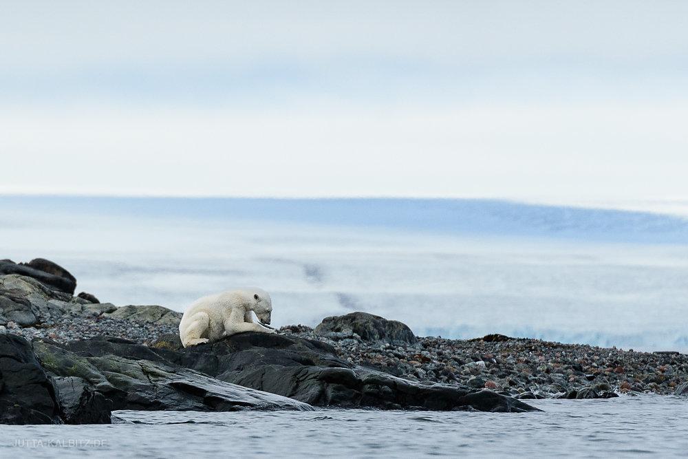 Svalbard-fauna-8.jpg