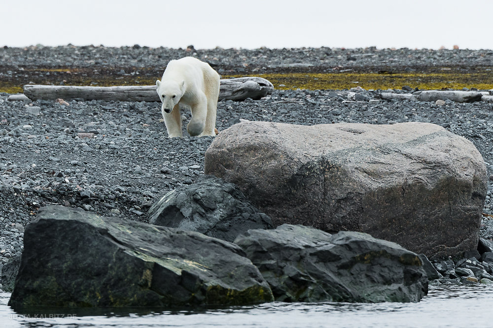 Eisbär - Storøya