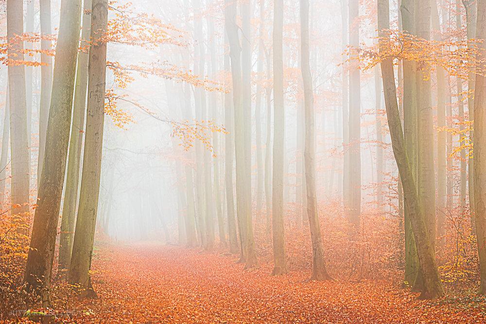 Herbst in der Dölauer Heide