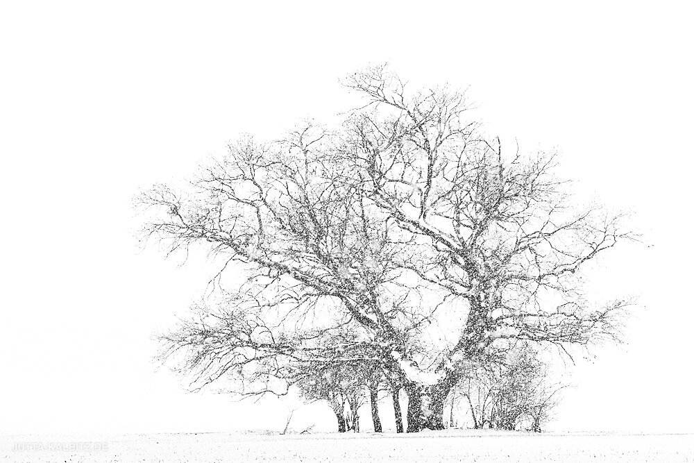 Blog-Winter-1.JPG