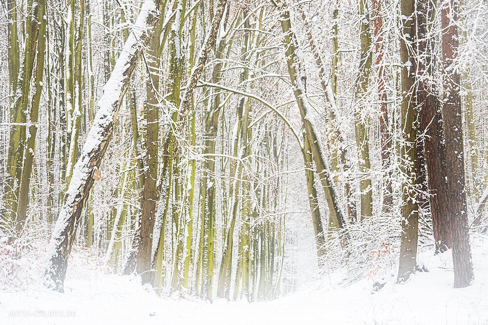 Blog-Winter-2.JPG