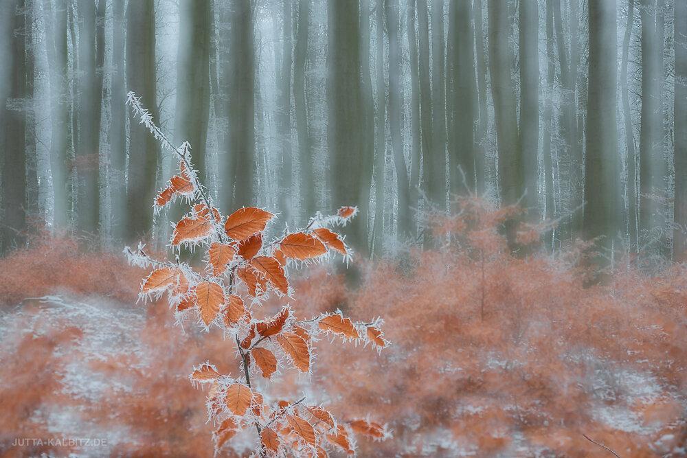 Blog-Winter-3a.JPG