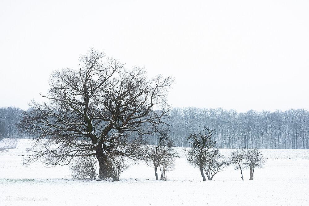 Blog-Winter-3d.JPG