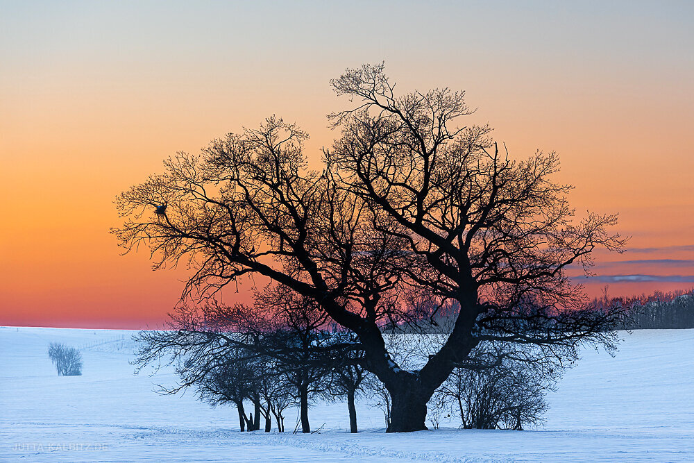Blog-Winter-3e.JPG