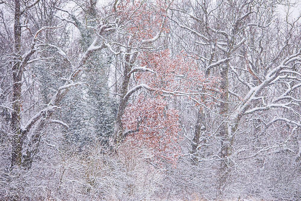 Blog-Winter-4a.JPG