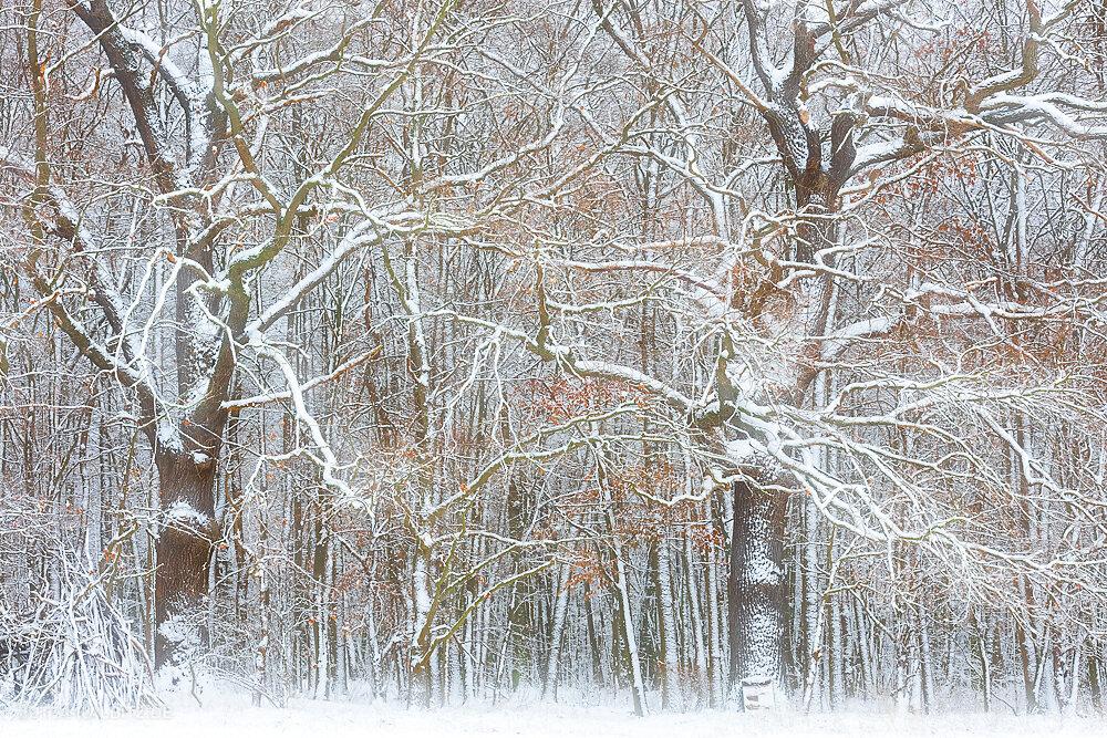 Blog-Winter-4c.JPG