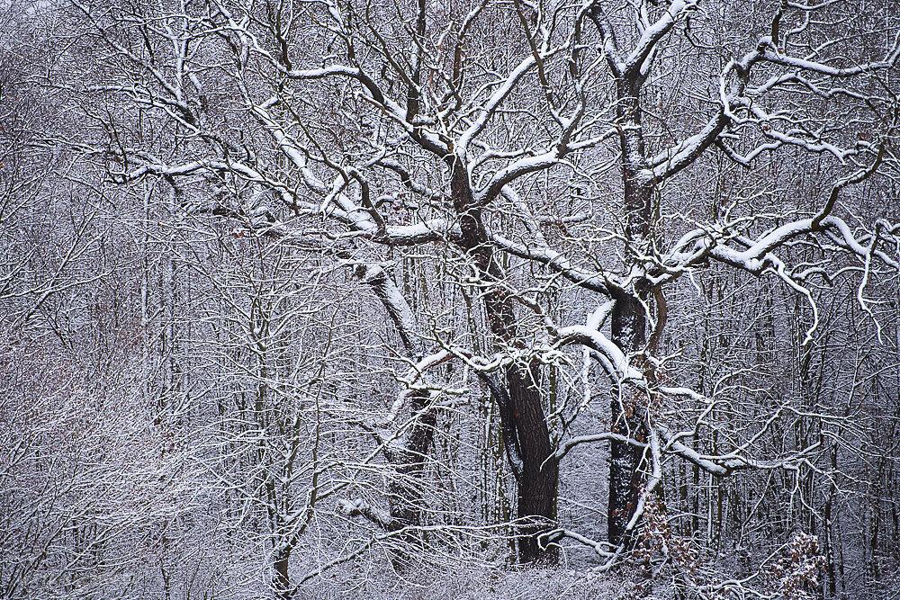 Blog-Winter-5a.JPG