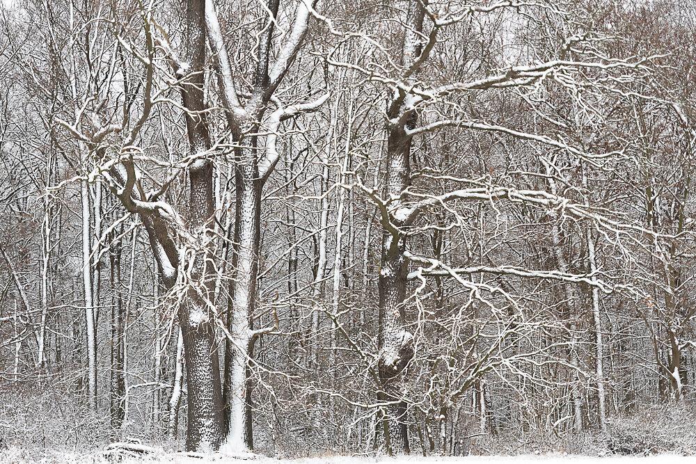 Blog-Winter-5c.JPG