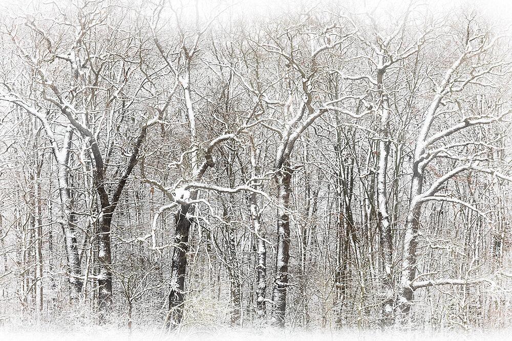 Blog-Winter-6a.JPG