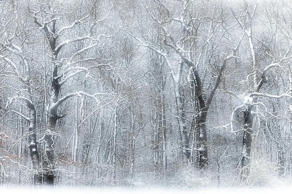 Blog-Winter-6b.JPG